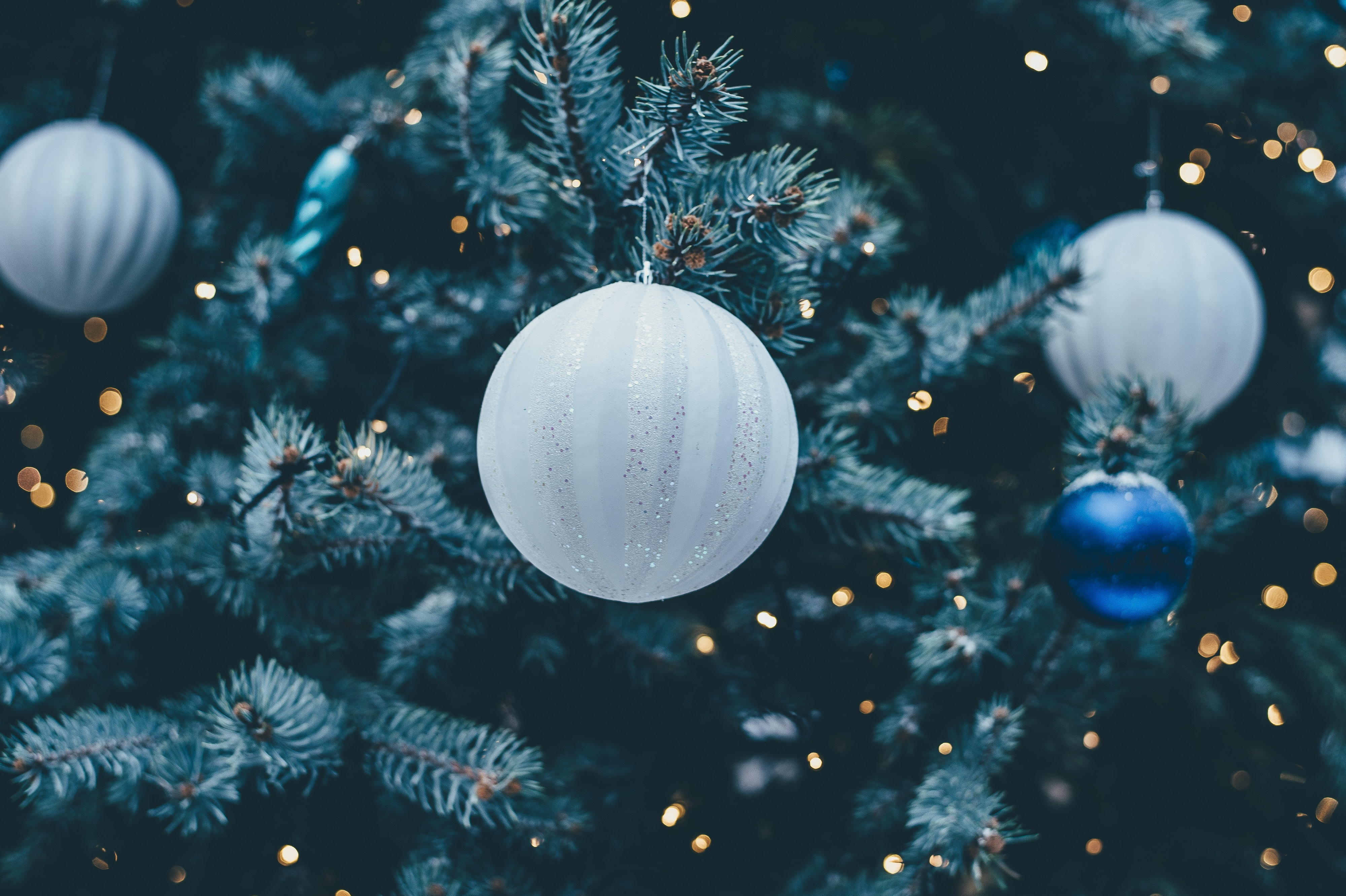 Navidad Rogelios